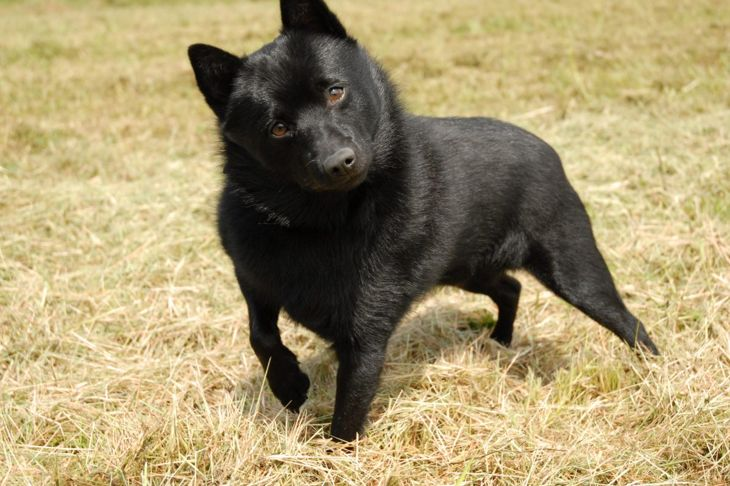gentle family dog