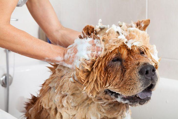 dog shampoo for dandruff