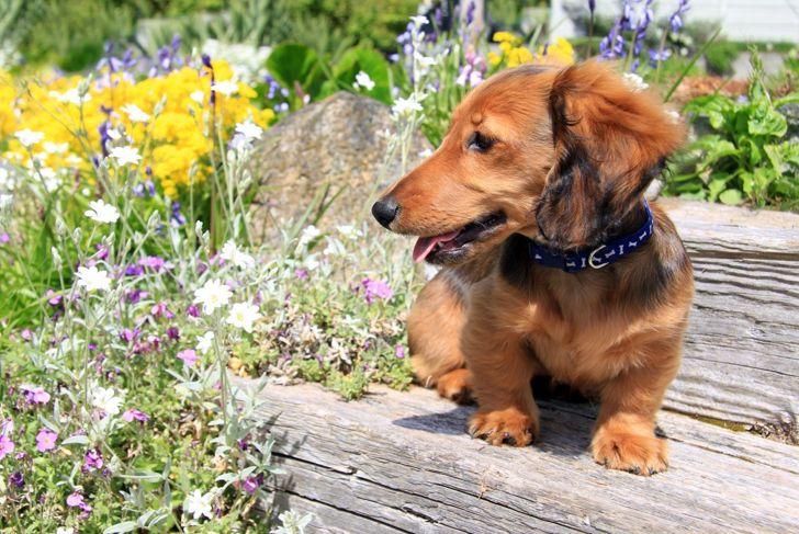 barks vocal dog breed