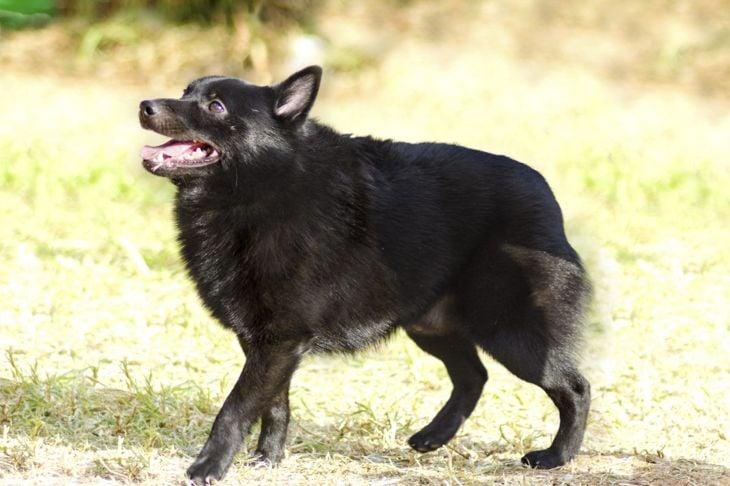distinctive black coat