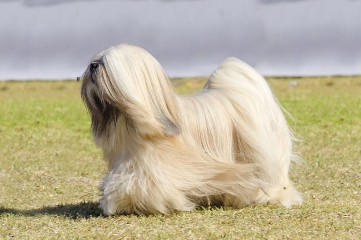 long coats grooming