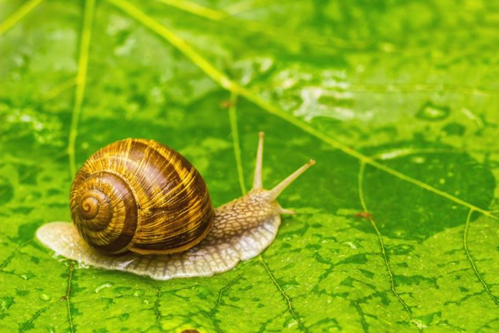 Snail on a green leaf.