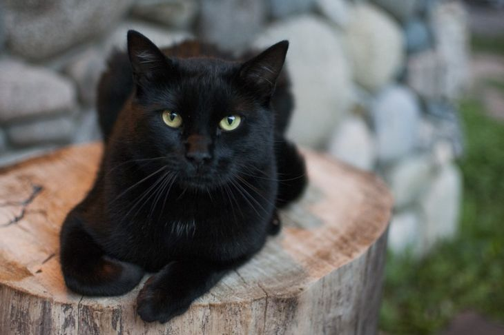 Black cat lounging outside
