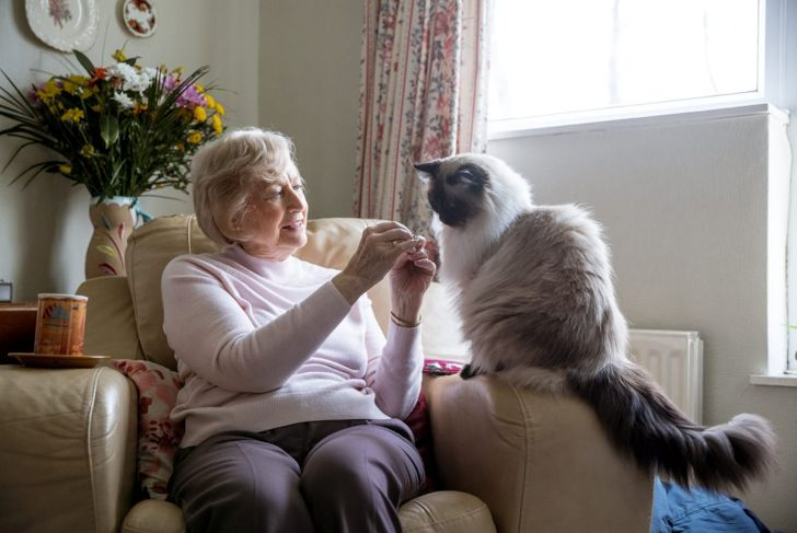 Himalayan cat with elderly woman
