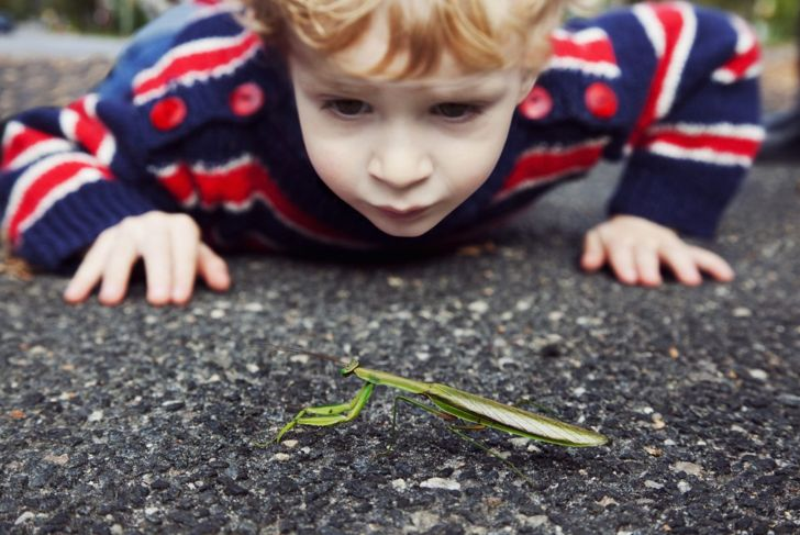 A child with a praying mantis.