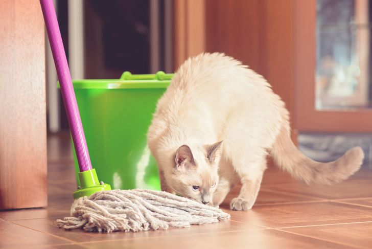 Curious cat near the bucket and mop for cleaning the floor. Scene from home life. Tinted, selective focus, close-up