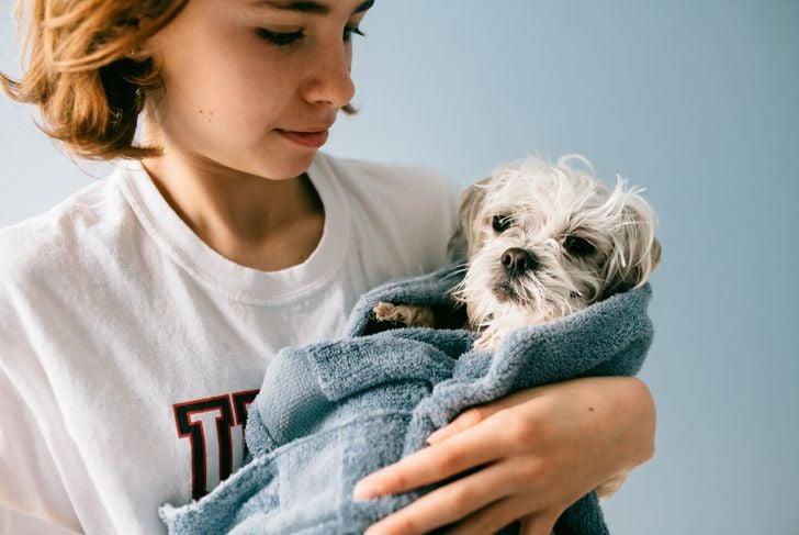 12 year old girl bathing a Maltese Dog