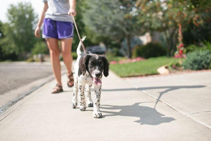 Teenage girl walking her puppy outside