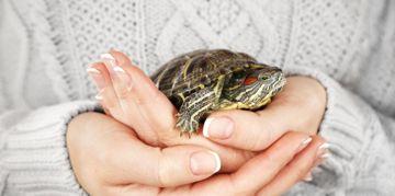 Should You Get a Pet Turtle?