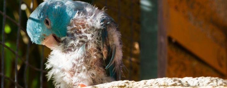 How to Handle Bird Mites