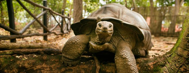 The Ins and Outs of the Pet Tortoise