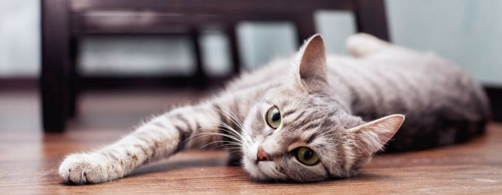 Fall In Love With the Magnificent Gray Tabby