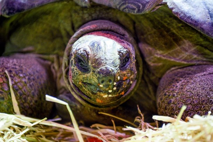 From Sulcatas to leopard tortoises, these pets come in many varieties.
