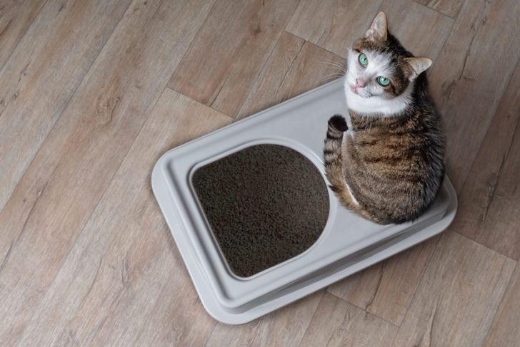 Cat sitting on an open litter box.