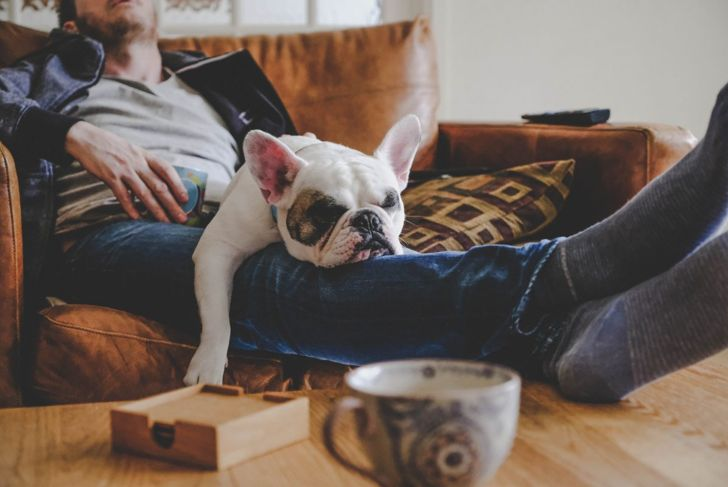 Dog resting with owner