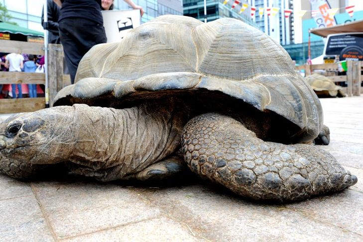 Tortoises use their strong legs to dig and climb, so give their shelter a bed and roof.