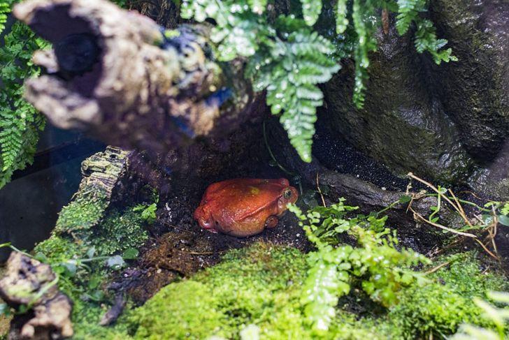 Frog in terrarium.