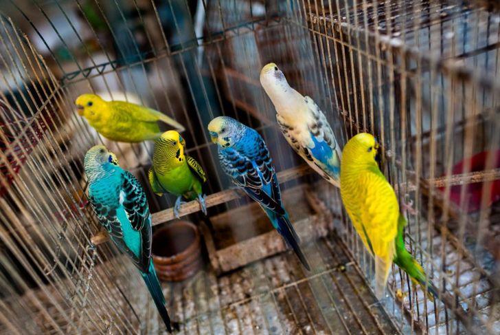 birds, United States, spring, summer