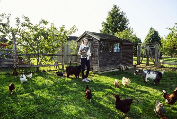 pet birds, chickens, veterinarian, treatment