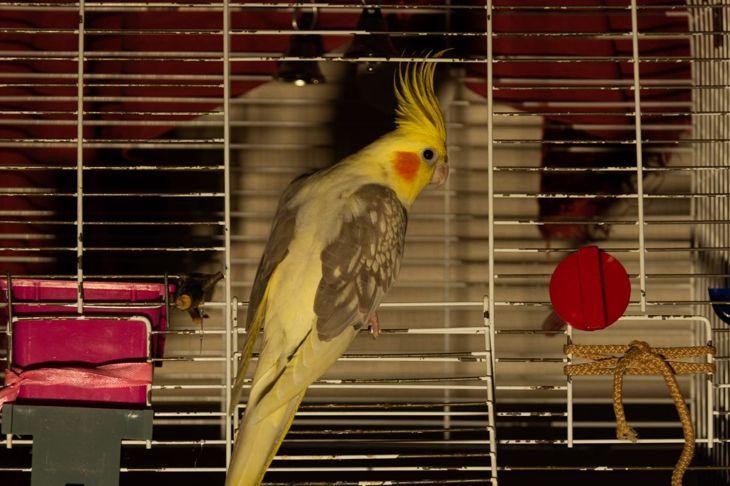 pet birds, poultry, symptoms, species
