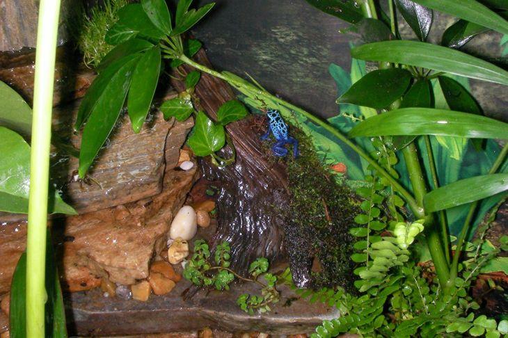 Frog on basking area.