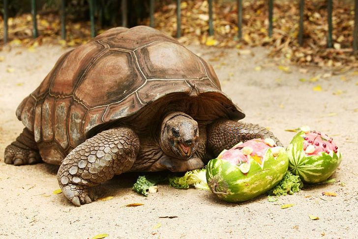 Help your tortoise stay tranquil by keeping them warm and avoiding overhandling.