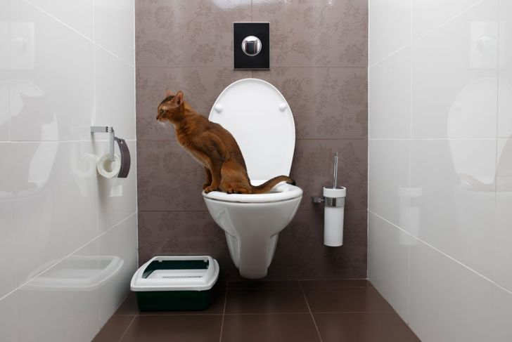 Cat sitting on a toilet.