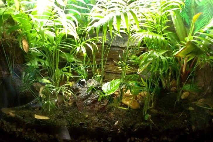 Heavily planted tank.