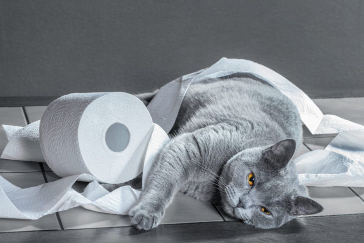 Cat wrapped in toilet roll.