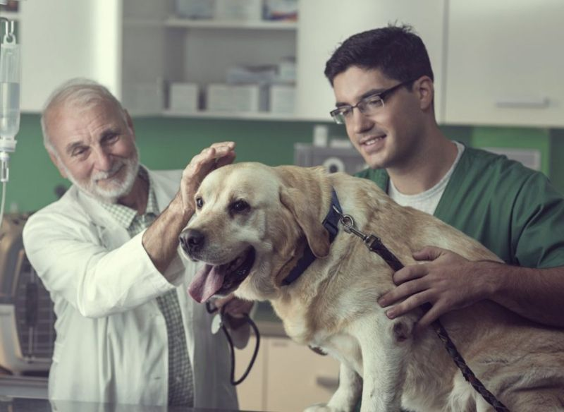 veterinarian treatment cognitive decline