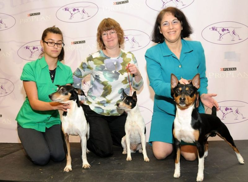 Rat Terriers Westminster Kennel Club