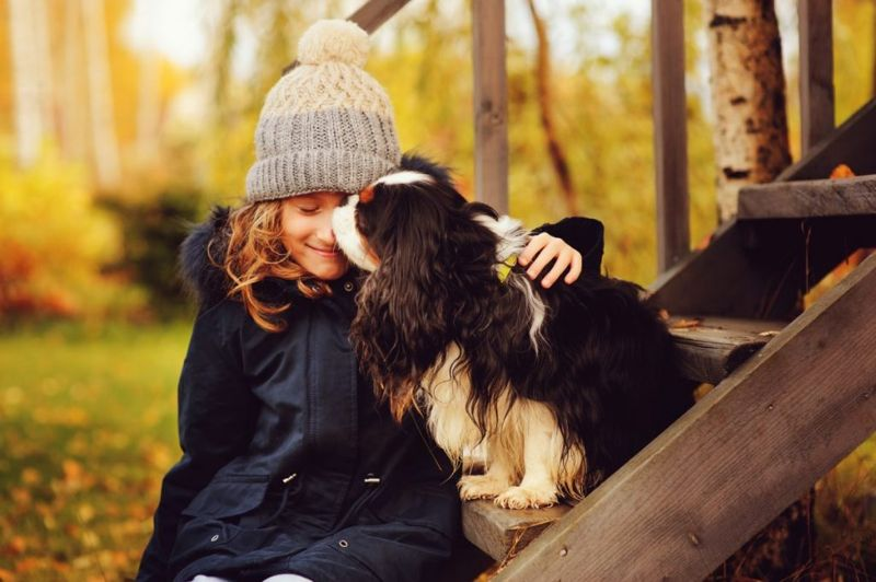 kind charles spaniel children pets