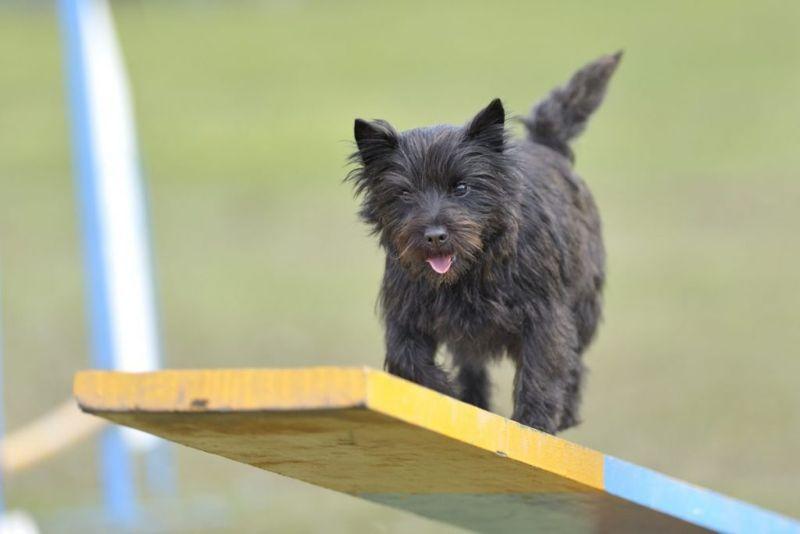 Enjoy agility training
