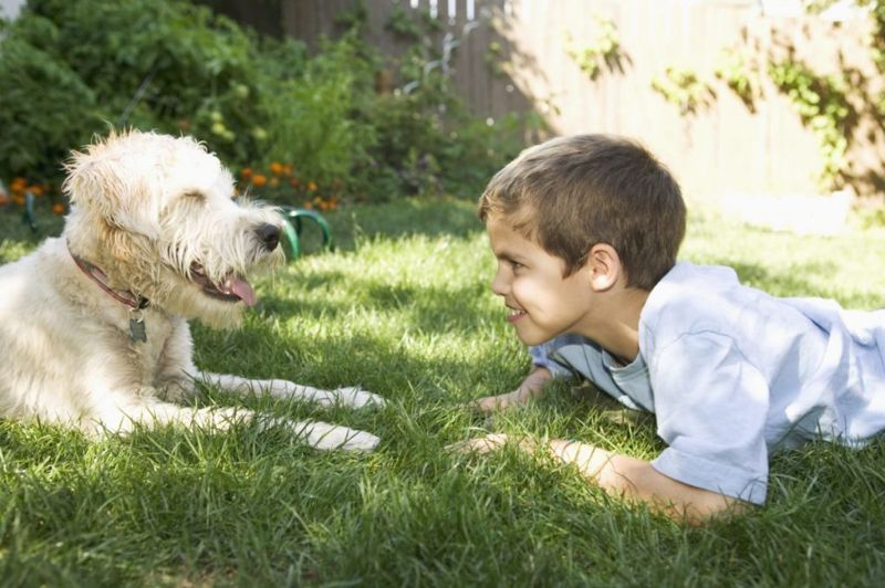 wheaten terriers and children
