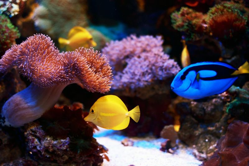 Colorful coral reef fish.