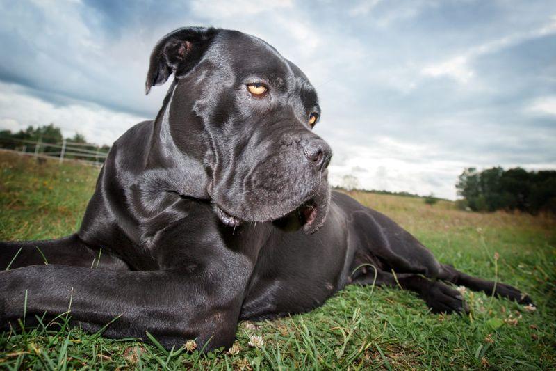 moisture massage sleeker coat dog
