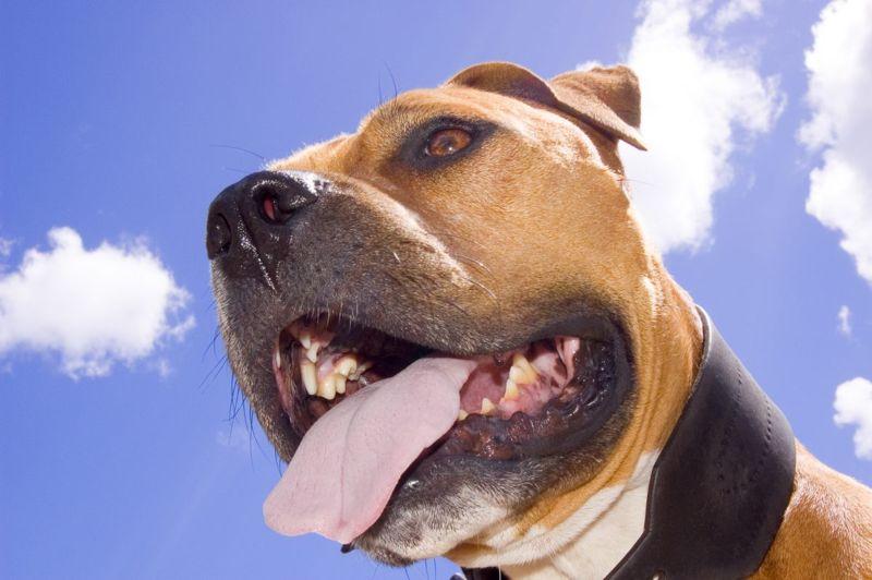 doggy breath healthy teeth gums