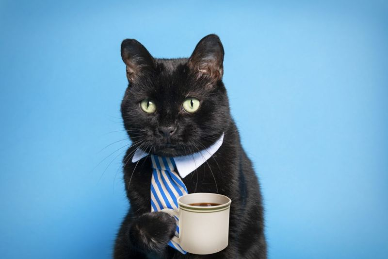 International Black Cat Names