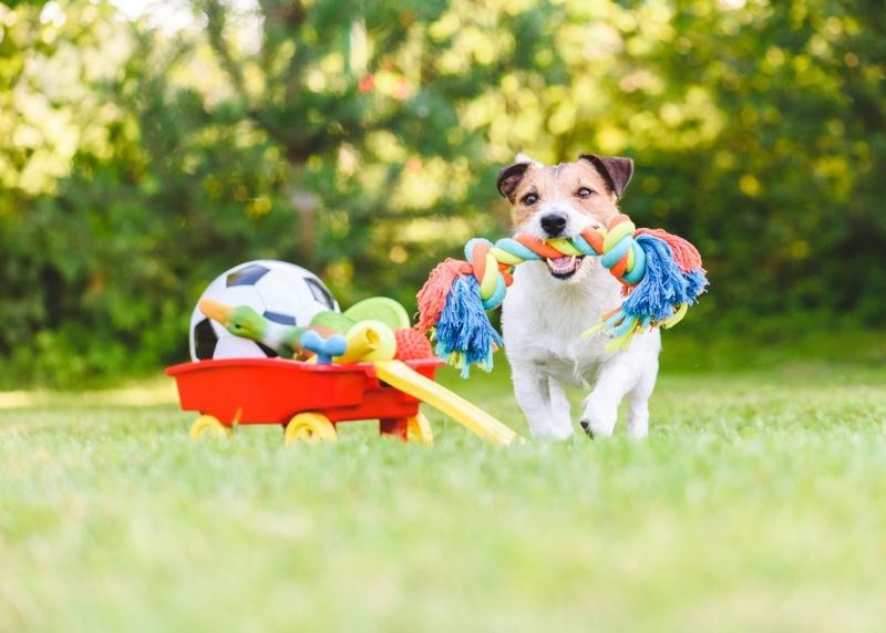 chew toy gift terrier