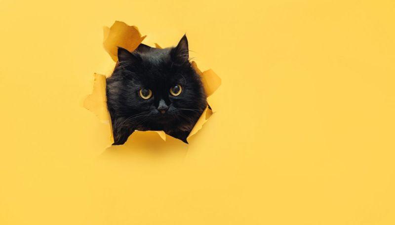 Funny cute black cat names