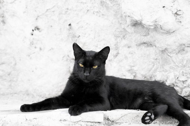 Mythological black cat names