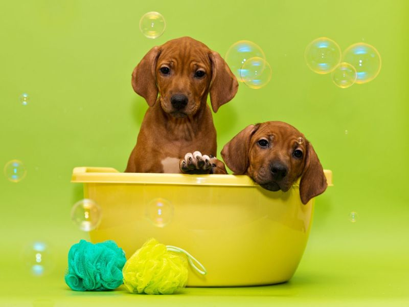 spa day puppies