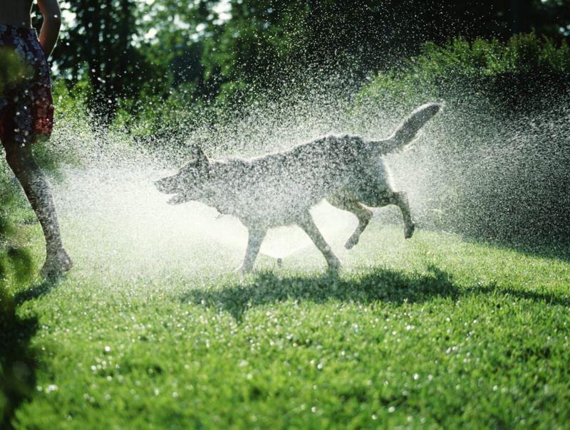 field day backyard sprinkler