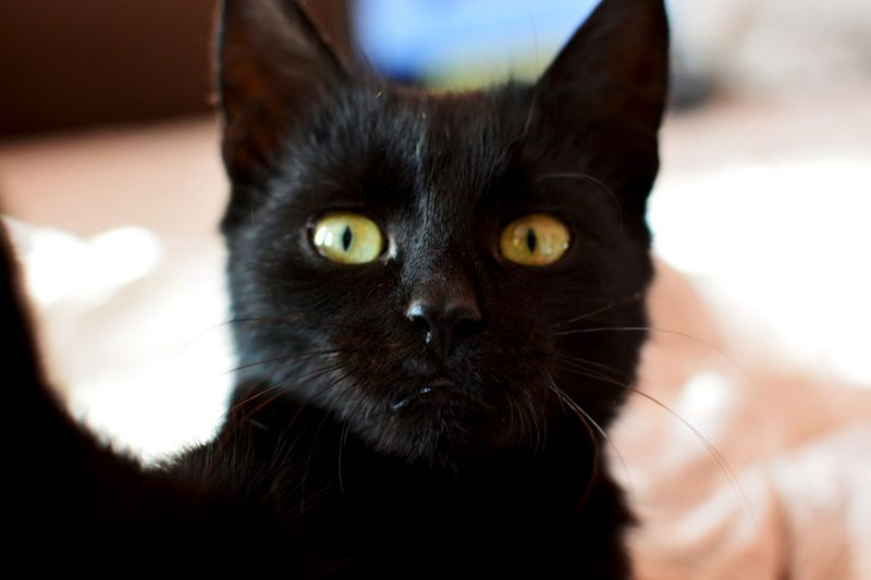 Traditional male black cat names