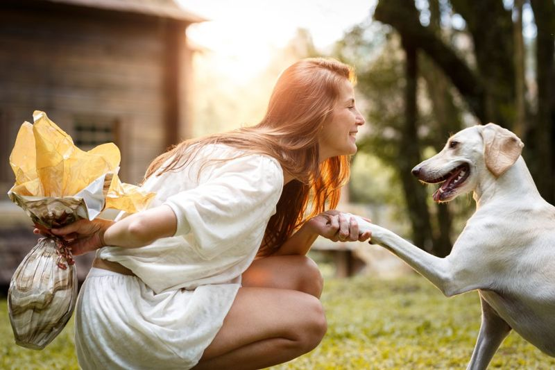 pet celebrate gift friend dog