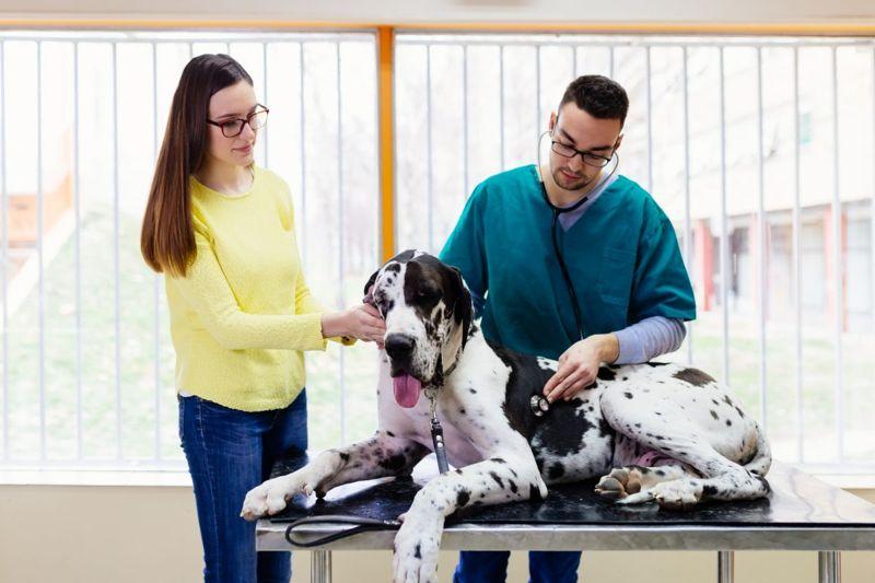 congenital heart defects veterinarian