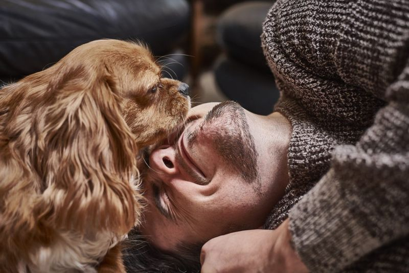 social media canine friend