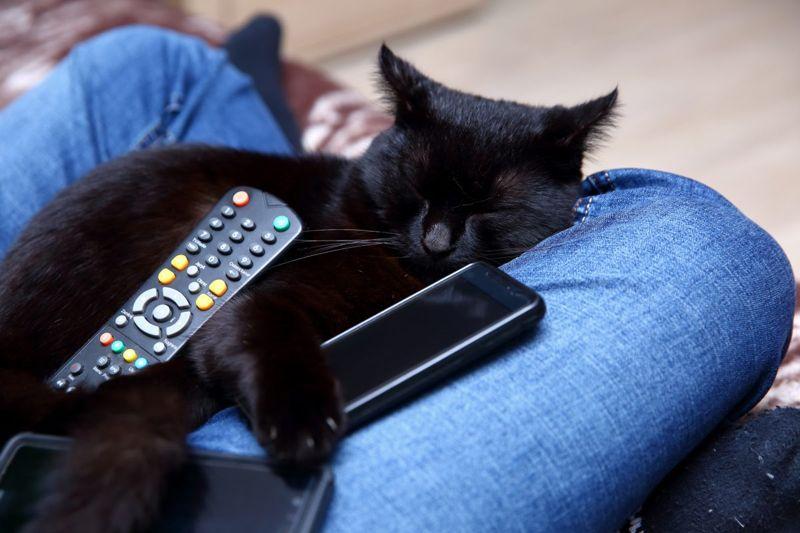 Pop Culture-Inspired Black Cat Names