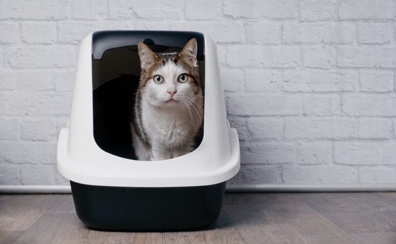 Build a covered litter box