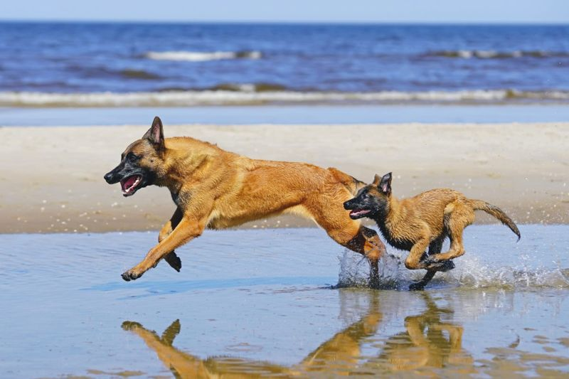 mental stimulation exercise canines beach